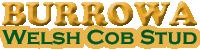 Burrowa Welsh Cob Stud logo